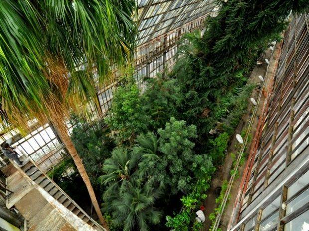 ботанический сад фомина киев