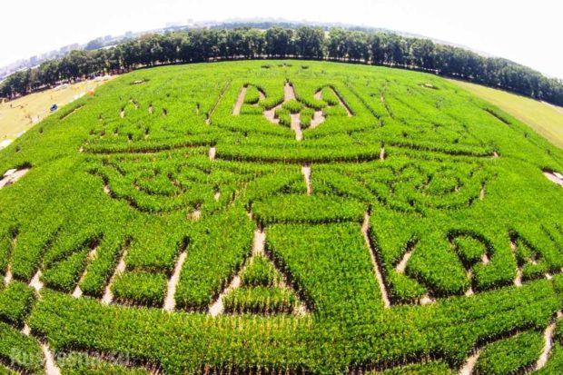 кукурузный лабиринт киев
