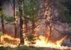 Киевлян предупреждают о чрезвычайном уровне пожарной опасности