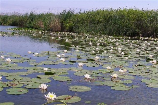 Дунаевский Природный Заповедник