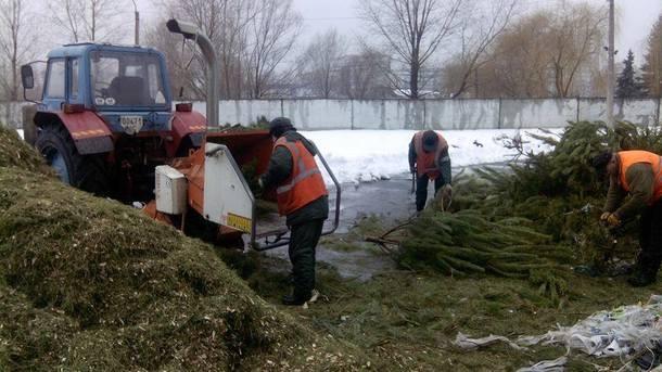 В Киеве открыли 15 пунктов приема новогодних елок