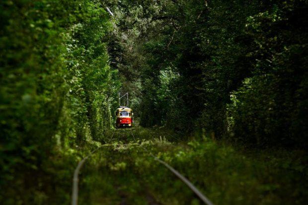 Лесной трамвай, Киев