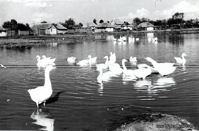 село по Киевской ГЭС Киев