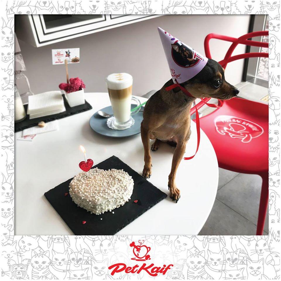 Pet Kaif, день рождения собаки, Киев