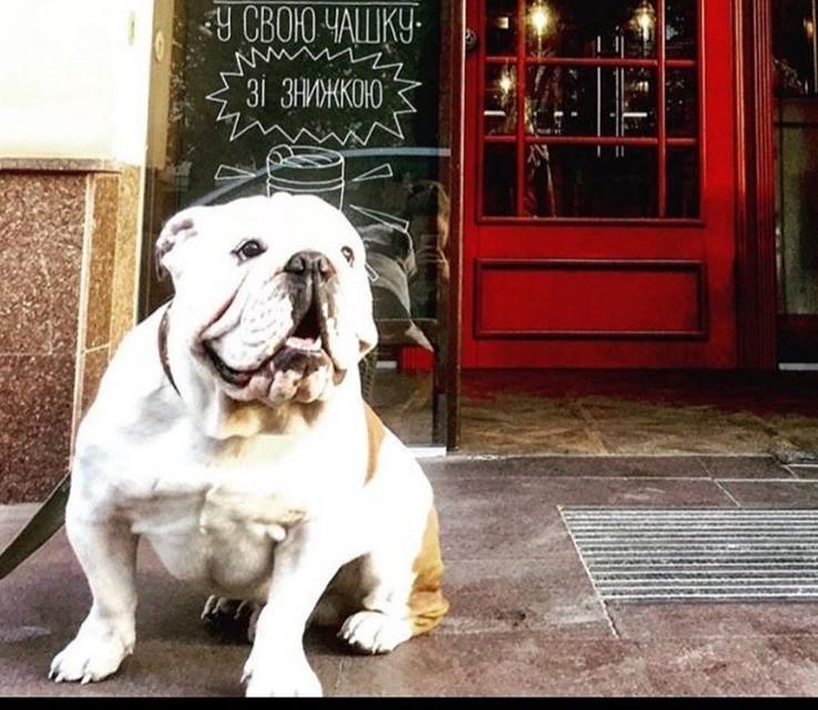 фото, Кофейный дом London